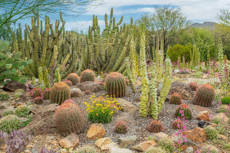 Sonoran Desert outside of Tucson Arizona